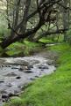 Oakey Creek, Capertee National Park