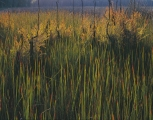 Regrowth of reeds and teatree, Thirlmere Lakes