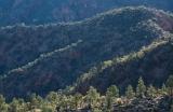 Pine-clad ridges