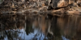 Waterhole reflections