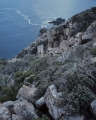 Mountain scrub, Bruny Island