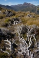 Alpine shrubs and Mount Hugel