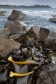 Kelp and South East Cape