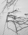Sand dune, sticks and shadows, Varna Bay