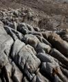 Eroded limestone, West Coast