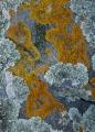 Lichens and schist, West Coast
