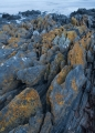 Lichens, Nye Bay