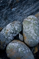 Three lichened boulders, West Coast
