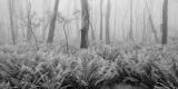 Boyd Plateau forest