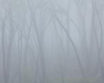 Black Ash and fog