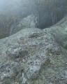 Green lichens, Gardens of Stone National Park