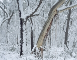 Snow and mountain forest