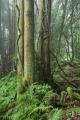 Warm temperate rainforest, Mount Wilson