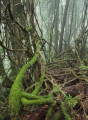 Lianas in warm temperate rainforest