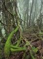 Lianas in warm temperate rainforest