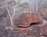 Sandstone and Blue Mountains Ash
