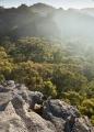 Clearing mist, Ben Bullen State Forest
