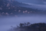 Morning fog, Ben Bullen State Forest