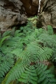 Chasm and ferns