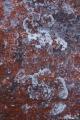 Lichens on sandstone