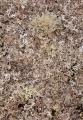 Lichens, Ben Bullen State Forest