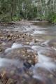 Grose River, Blue Gum Forest