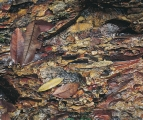 Shale and leaves