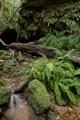 Ferny gorge