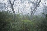 Scribbly gum woodland