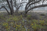 Floodplain and mist, Wyperfeld National Park