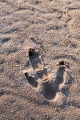 Emu footprint