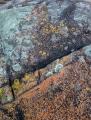 Lichens, Croajingolong National Park