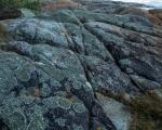 Shoreline lichens, Croajingolong National Park
