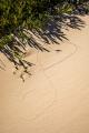 Dune tracks, Croajingolong National Park