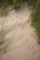 Bird tracks, Croajingolong National Park