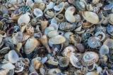 Shells, Croajingolong National Park