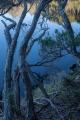 Melaleucas, Croajingolong National Park
