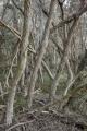 Melaleucas, Shipwreck Creek, Croajingolong National Park
