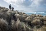 Windswept, Croajingolong National Park