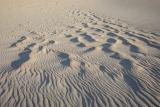 Rippled dune, Cape Howe
