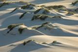 Dune mounds, Cape Howe