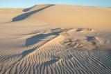Cape Howe dunes