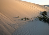 Dune at dawn, Cape Howe
