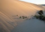 Dune at dawn, Cape Howe