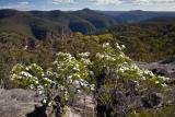 Wedding Bush and Colo Gorge