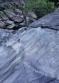 River boulder, lichens and Water Gum