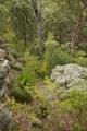 Flowering bushland