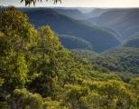 Eucalypts and Bowens Creek