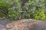 Wollemi bushland