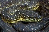 Diamond Python